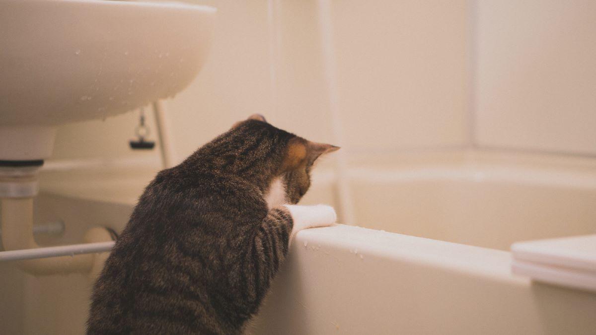風呂にお湯ためる